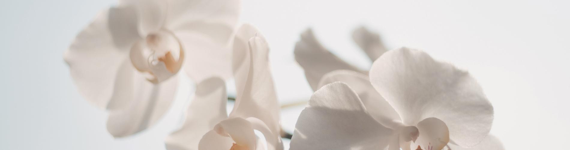 Weiße Orchidee im Kosmetikstudio Treffpunkt Schönheit Herne